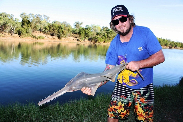 Evan nearly had his head slashed off while trying to release this Sawfish back into the Keep River