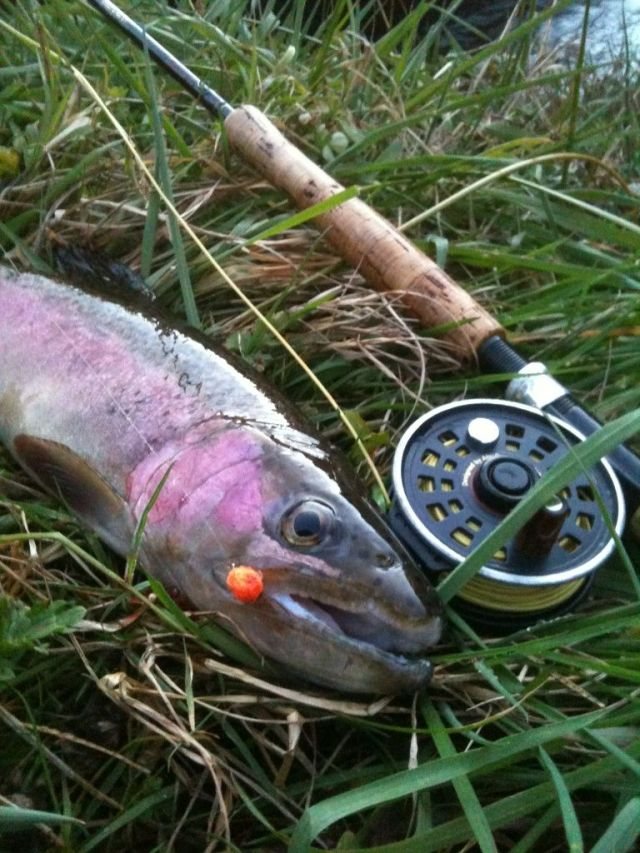 perrintrout1