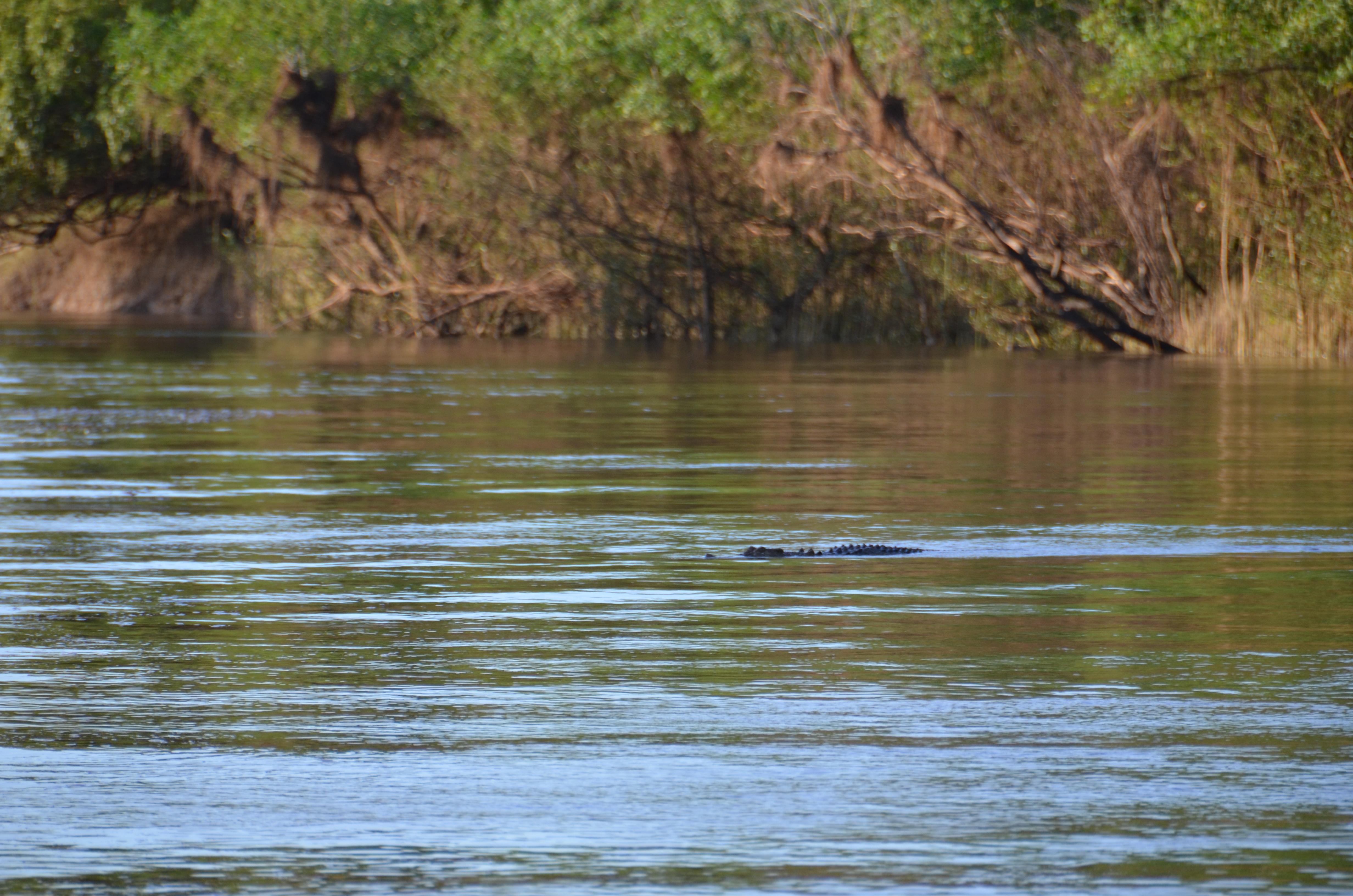 alligator river story